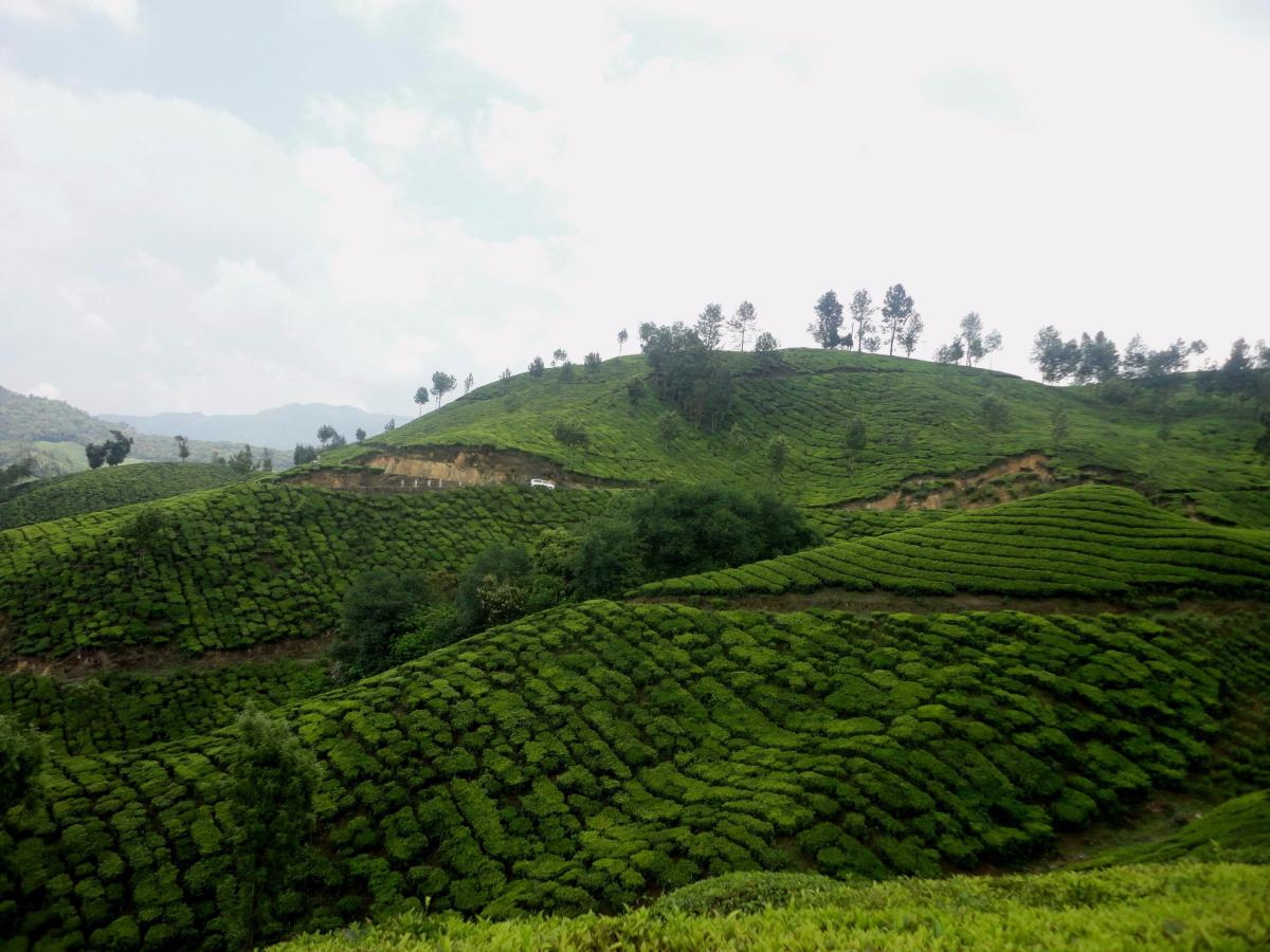 Munnar: Deep Into Nature